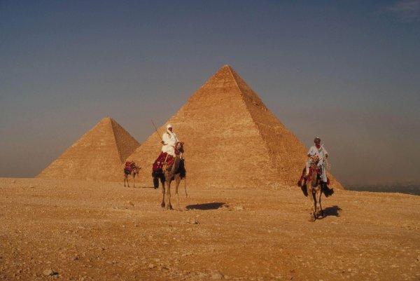 沙漠骆驼埃及金字塔高清图片4