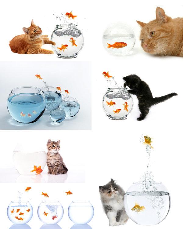 可爱猫咪与金鱼高清图片