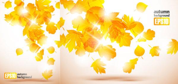 树叶,枫叶,红叶,落叶,飘落,秋季,矢量图,设计素材,eps格式