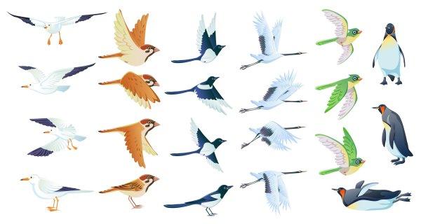 鸟,海鸥,企鹅,燕子.,设计素材,ai格式