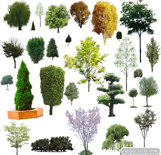 树木 灌木 乔木 树枝图片素材,ps后期素材乔木psd素材免费下载,免费