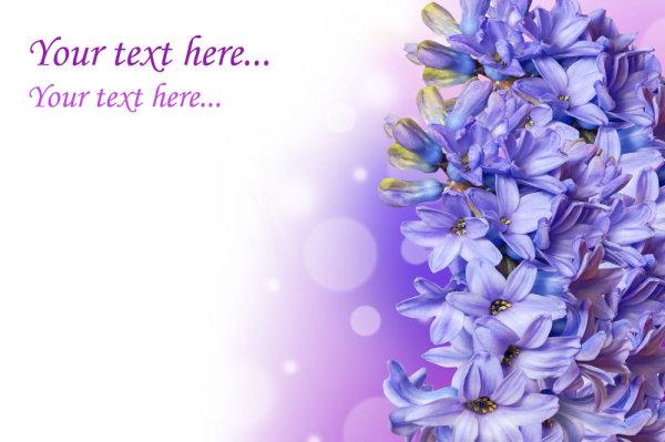 关健字:绚丽,丁香花,鲜花,花朵,花蕊,背景,高清图片,设计素材
