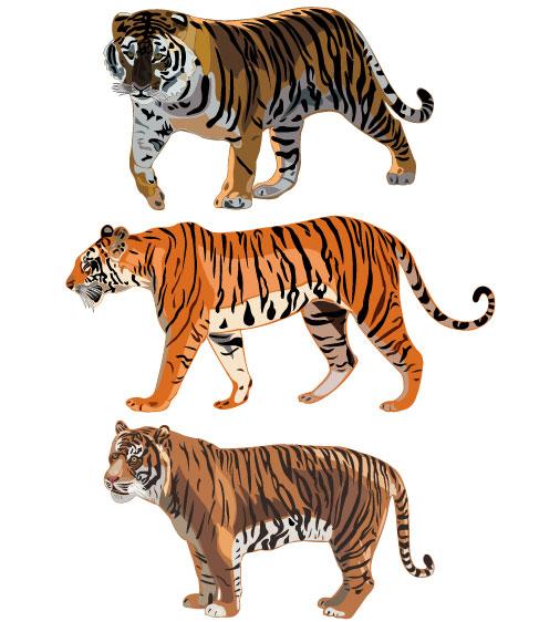 老虎,矢量图,虎纹,虎头,虎纹图案,设计素材,eps格式