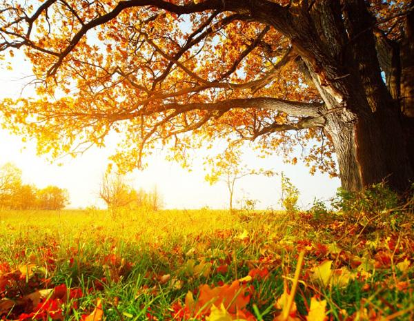 美丽的秋天图片素材-风景图片-高清图片-素彩网