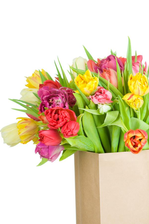 郁金香鲜花图片素材-花卉花纹-高清图片-素彩网