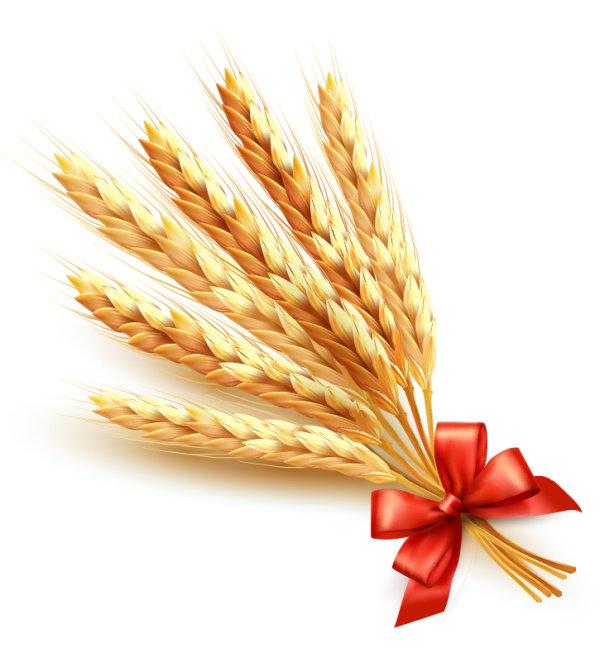 小麦,麦穗,麦子,蝴蝶结,丝带,光晕,光泽,矢量图,设计素材,eps格式