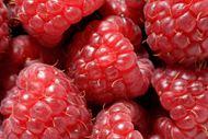 高清树莓图片