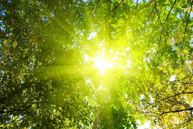 树叶,叶子,树木,树林风景,树叶,叶子,树木,森林,阳光,夕阳,太阳,自然