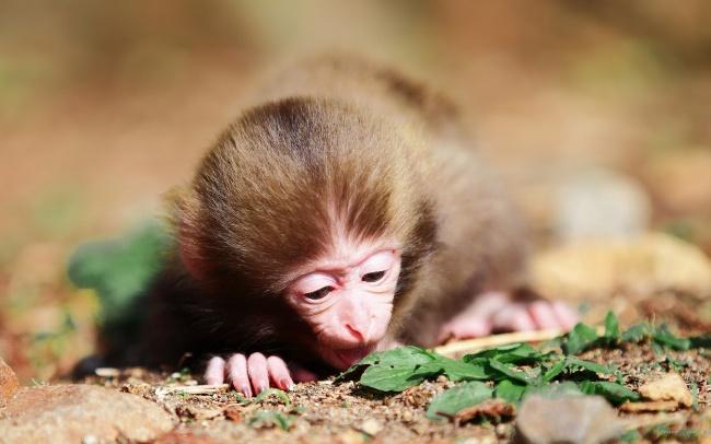 可爱小猴子图片