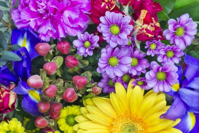 花的图片,彩色花朵,鲜花,花朵,自然,风景,鲜花,花卉,花朵,植物,微距