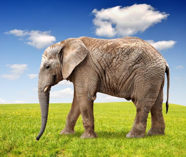 壁纸 大象 动物 650_549