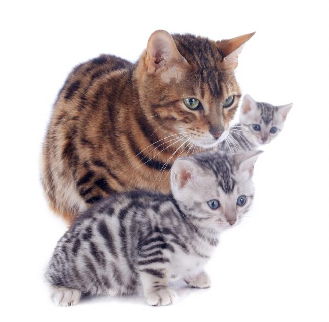 小猫,猫咪,萌猫,花猫,三只,宠物,萌宠,家宠,动物,生物世界,图片大全