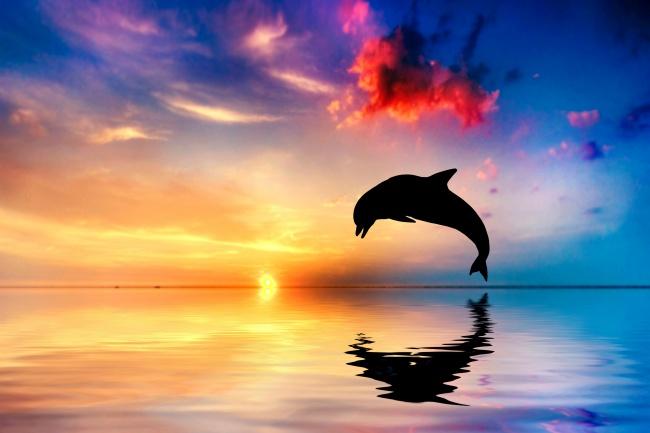 海洋生物图片,海滩,海豚,背影,彩霞,黄昏,海滩,海豚,大海,海水,夕阳