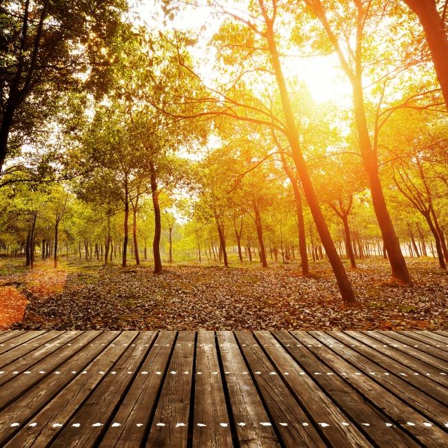 落叶,木地板,逆光,树木,树林,大树,落叶,叶子,木地板,茂盛,茂密,阳光