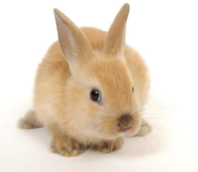 萌兔子图片-素彩图片大全