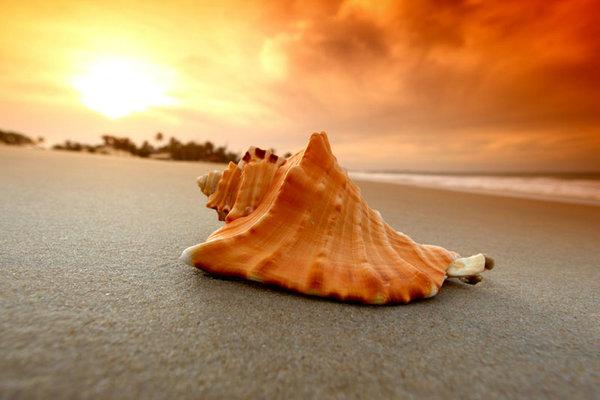 精美海洋生物图片素材-其他图片-高清图片-素彩网