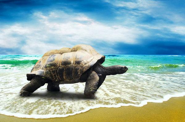 海洋生物图片素材,精美,海洋,生物,动物,海龟,海水,海浪,沙滩,天空,白