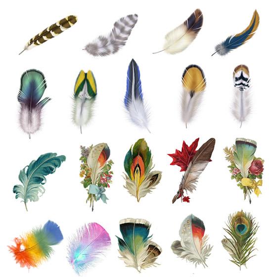 动物羽毛,鸟类羽毛图片素材,免费羽毛psd素材下载