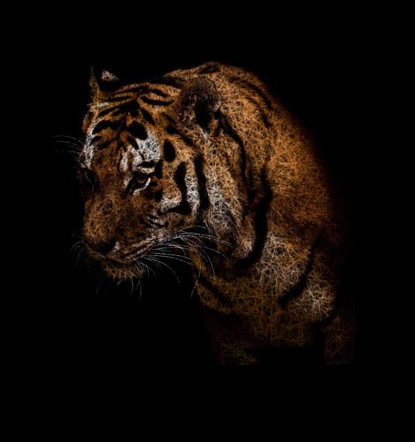 线条老虎图片素材-创意图片-高清图片-素彩网