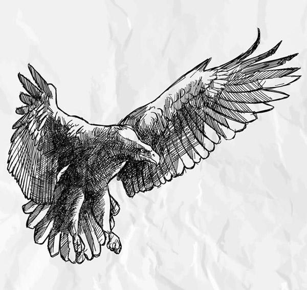 手绘展翅雄鹰矢量图片-矢量人物与卡通-矢量素材-素彩