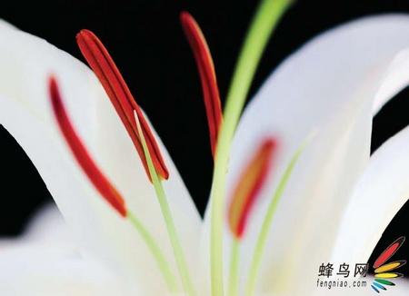 比你想象的要复杂 专业花卉摄影技巧下