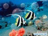 教你用ps绘制热带鱼的透明气泡