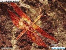 ps CS3打造蜻蜓古化石效果图
