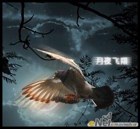 PS合成梦幻夜空下飞翔的鸽子