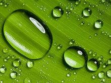 精灵剔透的水滴高清图片2