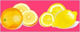 柠檬与橘子矢量水果素材