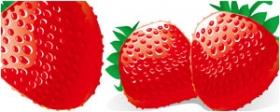 红草莓矢量图
