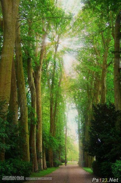 ps教你制作穿透树木的光线效果