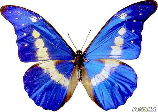 ps打造精美的戴花饰的蝴蝶仙子