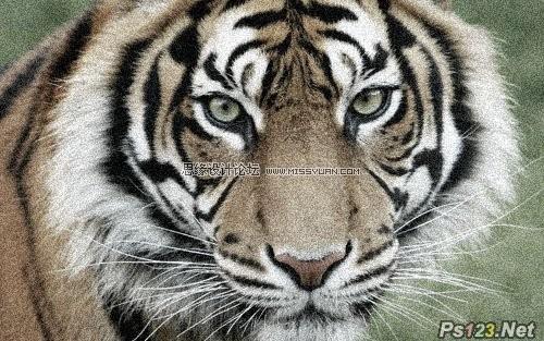 ps教你制作老虎照片帆布纹理效果