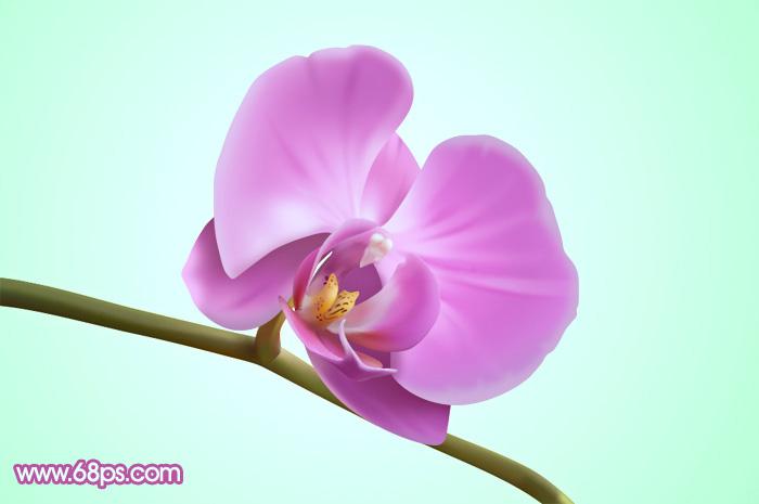 ps教你制作一朵漂亮的紫色蝴蝶兰