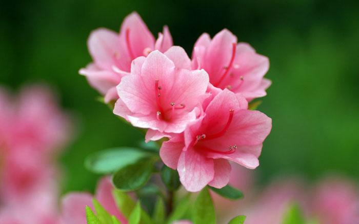 ps打造古典韵味的花卉特写图片