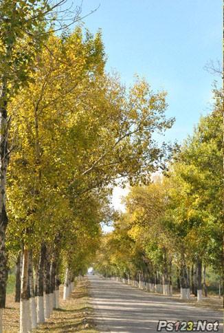 ps快速给树林图片增加艳丽的秋季色