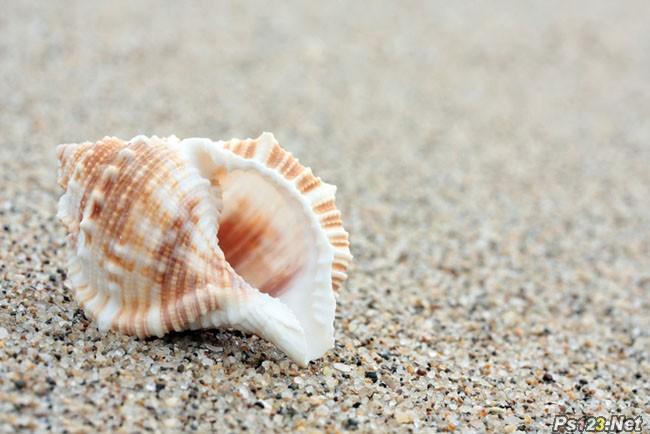 ps调出沙滩海螺图片漂亮的淡黄色