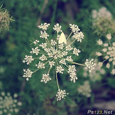 ps为普通花卉照片添加柔和艺术效果