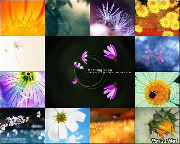 创意花卉摄影作品技巧分享