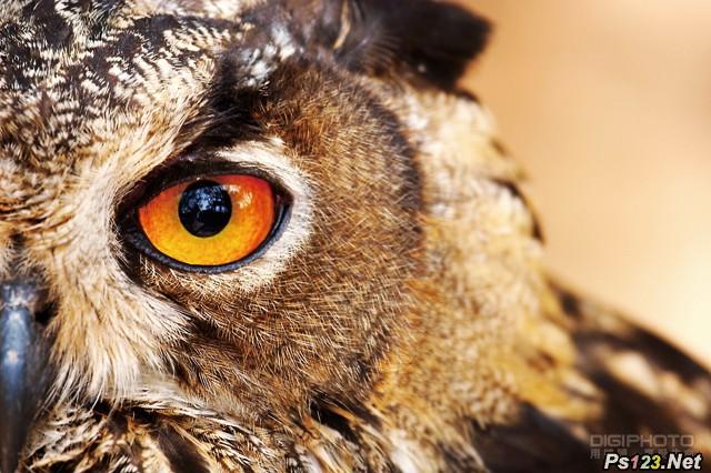 7招生态摄影这样拍,让你抓住动物的神韵
