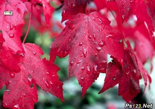 秋日红叶的拍摄技巧