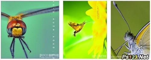 昆虫摄影基础知识讲解