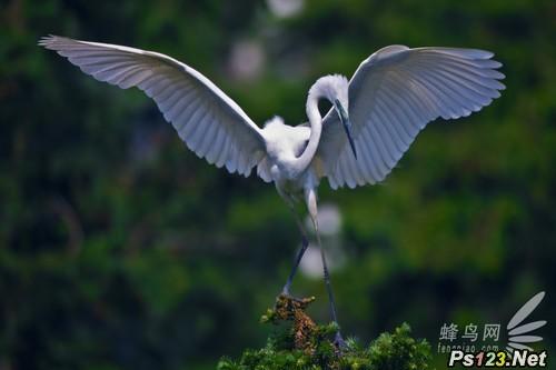 鸟类摄影攻略之快门速度