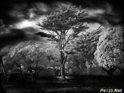 黑白摄影的魅力,如何拍摄好的黑白照片