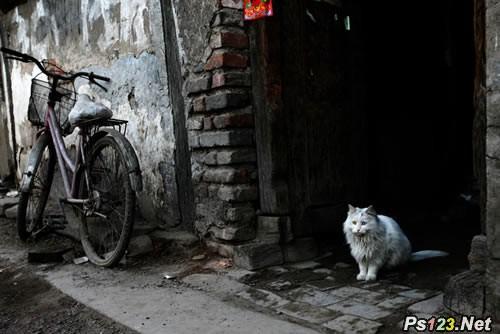 胡同里的猫