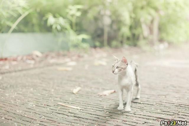 宠物猫拍摄入门技巧