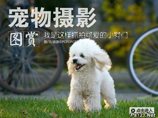 宠物摄影教程:我是这样抓拍可爱的小狗们 三联教程