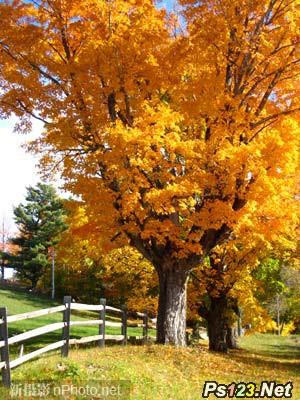 如何拍摄美丽的秋日景色
