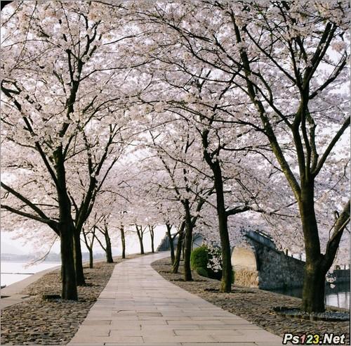 拍摄樱花的5个要素 三联教程